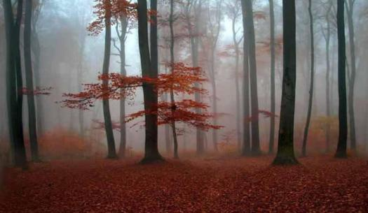 foggy-autumn