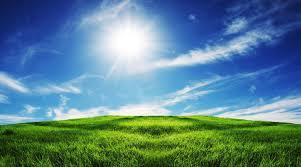bright sun, blue sky green grass